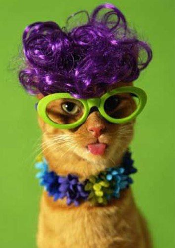 Purple Hair, Dresses Up, Funny Cat, Wigs, Funniest Pictures, Funny Animal, Crazy Cat Lady, So Funny, Purple Stuff