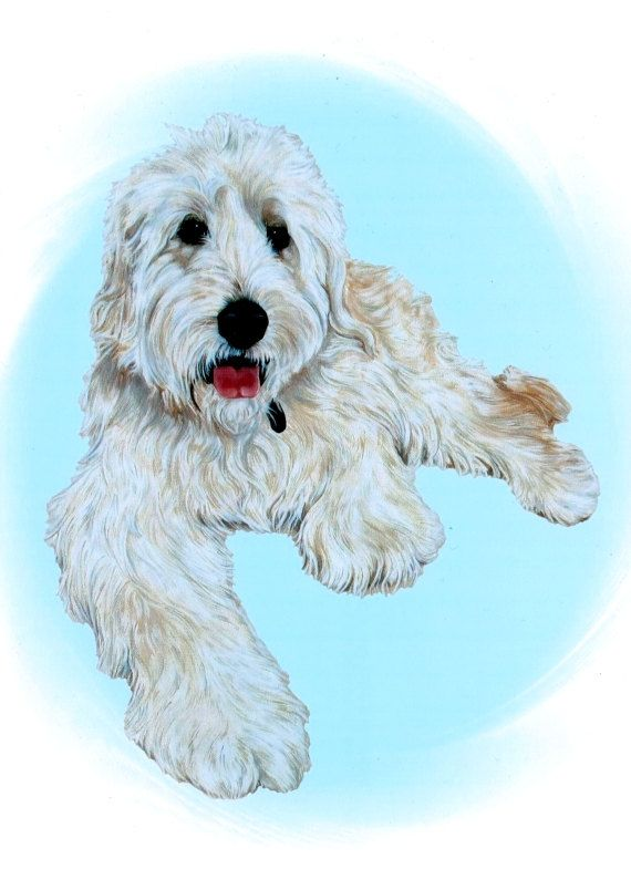 Goldendoodle  Goldendoodle Art  Goldendoodles  by ArtbyWeeze