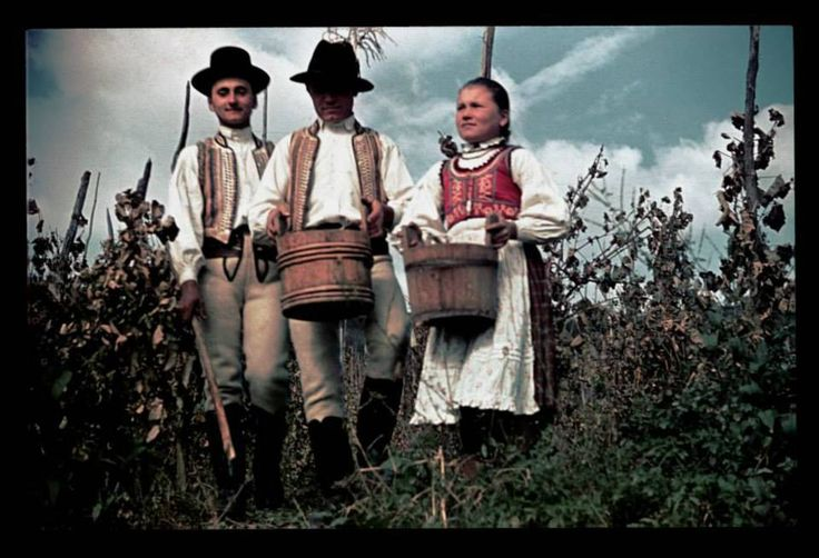 szüret, Balavásár/Balauseri, Transylvania Hungarian