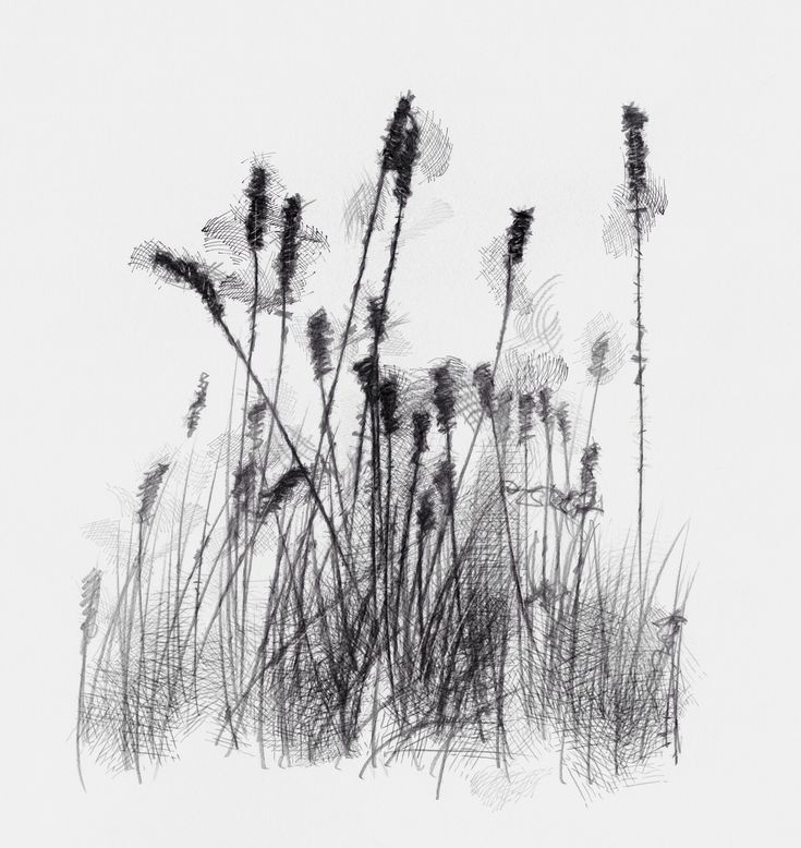 grass drawing black and white. artist sean briggs producing a sketch day just grass drawing http black and white r