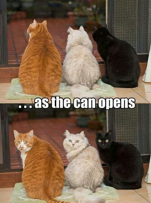 Can openers..