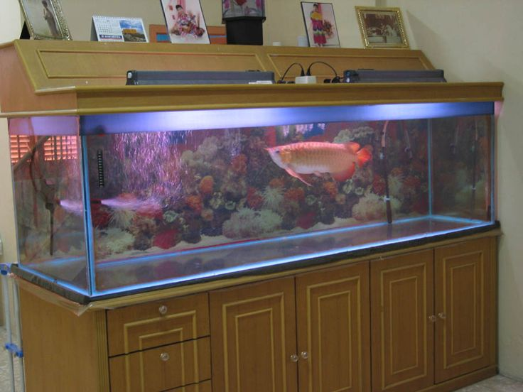 21 best images about big fish tanks on pinterest big