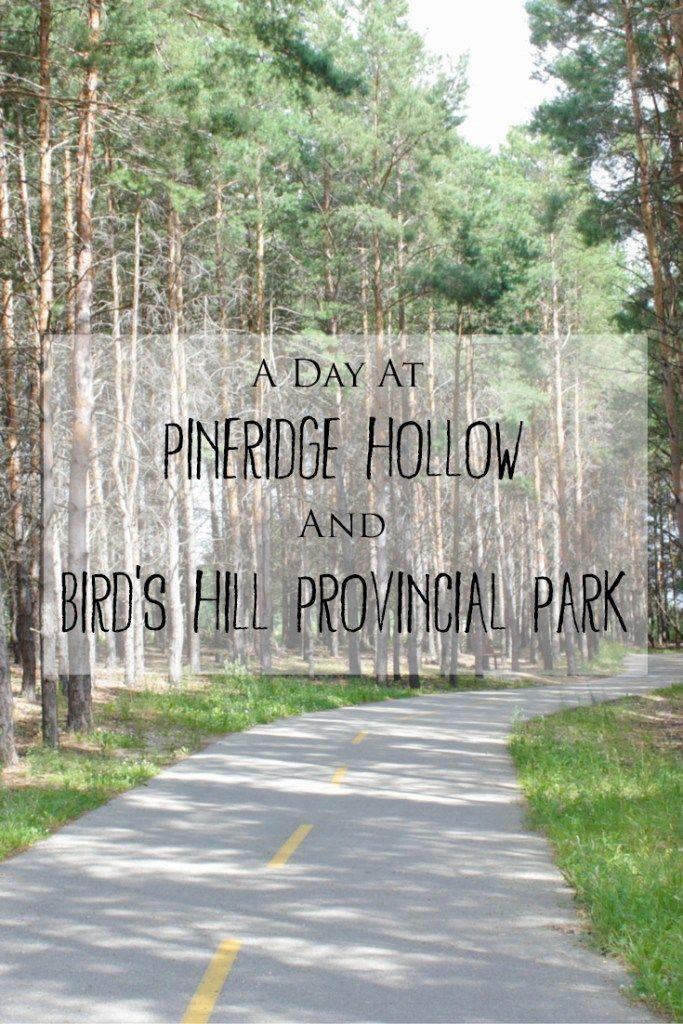 A Day at Pineridge Hollow and Bird's Hill Provincial Park in Manitoba -> Visiting the Pineridge Hollow Restaurant and Gift Shop in Bird's Hill Park makes the perfect day trip from Winnipeg! You can browse the farmers market and support local farmers and businesses, go for a walk/hike along one of the trails in Bird's Hill Park, eat a delicious lunch at Pineridge Hollow, check out the small petting zoo and take photos of the beautiful gardens and property at Pineridge Hollow.