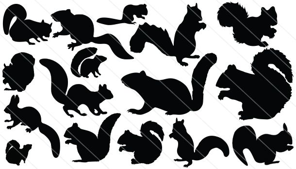Best 25+ Squirrel Silhouette Ideas On Pinterest