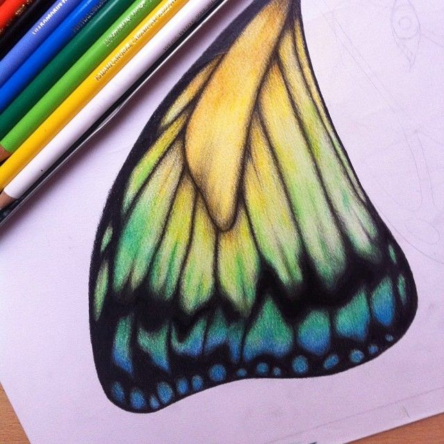 The making of a butterfly 🌺