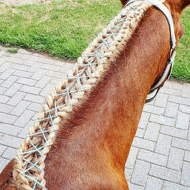 New braid I tried out😊. Own idea😁. If you make something like this put #shoelacehorsebraid under it and maybe I will give you a 2k+ shoutout . #pony #basje #shet #shetlander #welsh #shetlanderxwelsh #shetxwelsh #braid #vlecht #braids #vlechten #braided #gevlochten #2braids #2vlechten #2 #shoelace #schoenveter #shoelacebraid #blue #blauw #brown #bruin #blond #horse #paard #horses #paarden #horsebraid