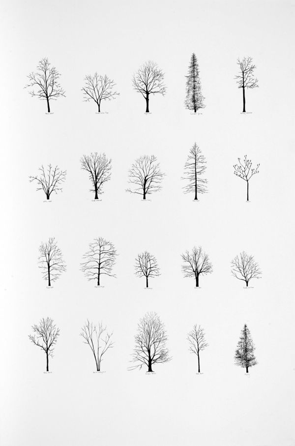 trees in black & white | winter . Winter . hiver | Design: Katie Holten |