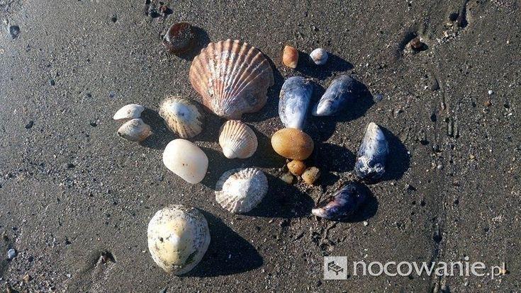 Jeszcze trochę wspomnień z Edynburga, Krzysiek #Edingurgh #photo #shell