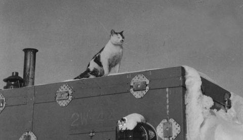 南極の嵐に耐える猫タケシ 泣ける!!