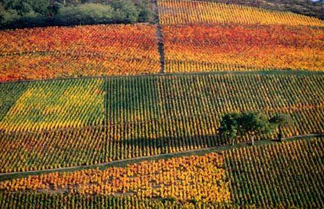 Beaujolais Wine Route- France.
