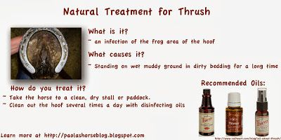 Natural Cures For Thrush In Horses
