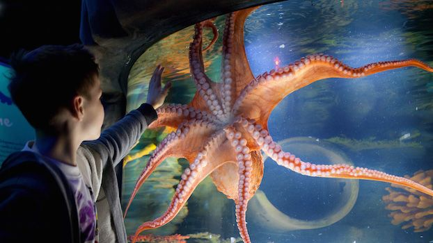 Book tickets to SEA LIFE Charlotte-Concord Aquarium online in advance to guarantee entry and save up to $5 off the door price!