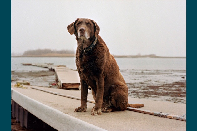 Moxie, 13 - Winthrop, MA, 2011.    Search & rescue dog Moxie and her handler, Mark Aliberti, arrived at the World Trade Center on the evening of September 11, 2001, and searched the site for eight days.