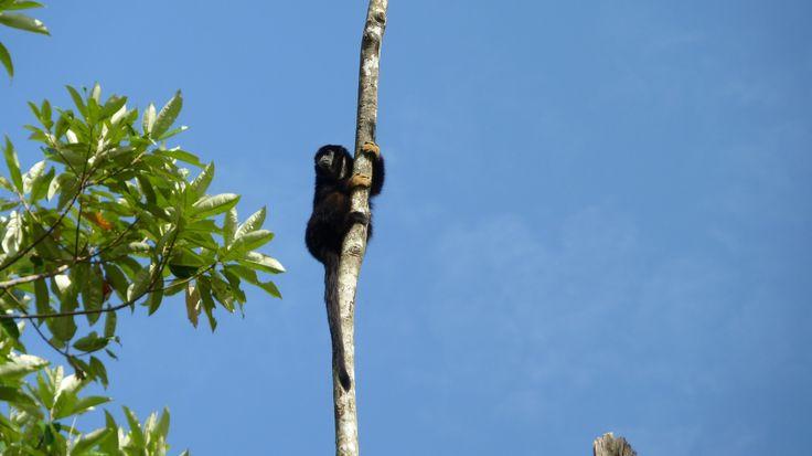 Mono en lo alto by Elbisnet - Elbis Bonilla  on 500px
