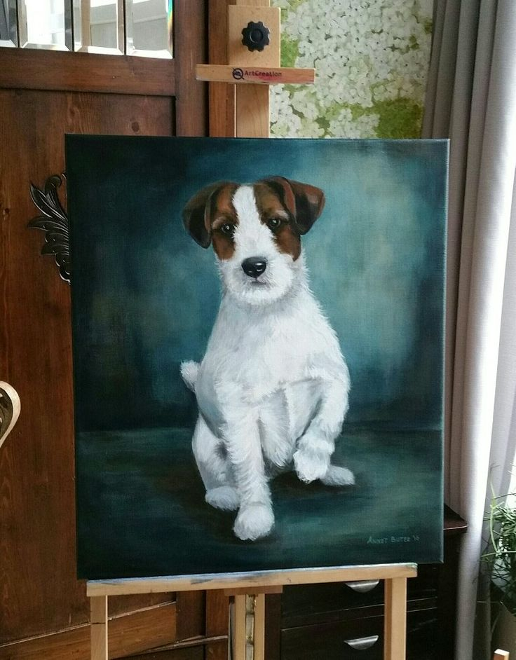 188 best Dogs- Jack Russel Terriers, Rat type Terriers images on ...