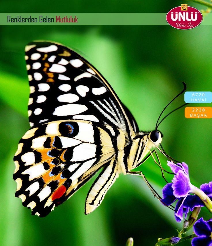 Hayatın tüm renkleri, tam 38 yıldır Ünlü Boya ile sizlerle...  #iyihaftasonları  #colors #paint #painting #life #followme #turkey #today #photo #brush #colorfull #products #tbt #followforfollow #cityofizmir #natural #dogal #green #red #yellow #cumartesi #saturday #deniz #sea #mavi #blue #flowers #goodmorning #butterfly #kelebek
