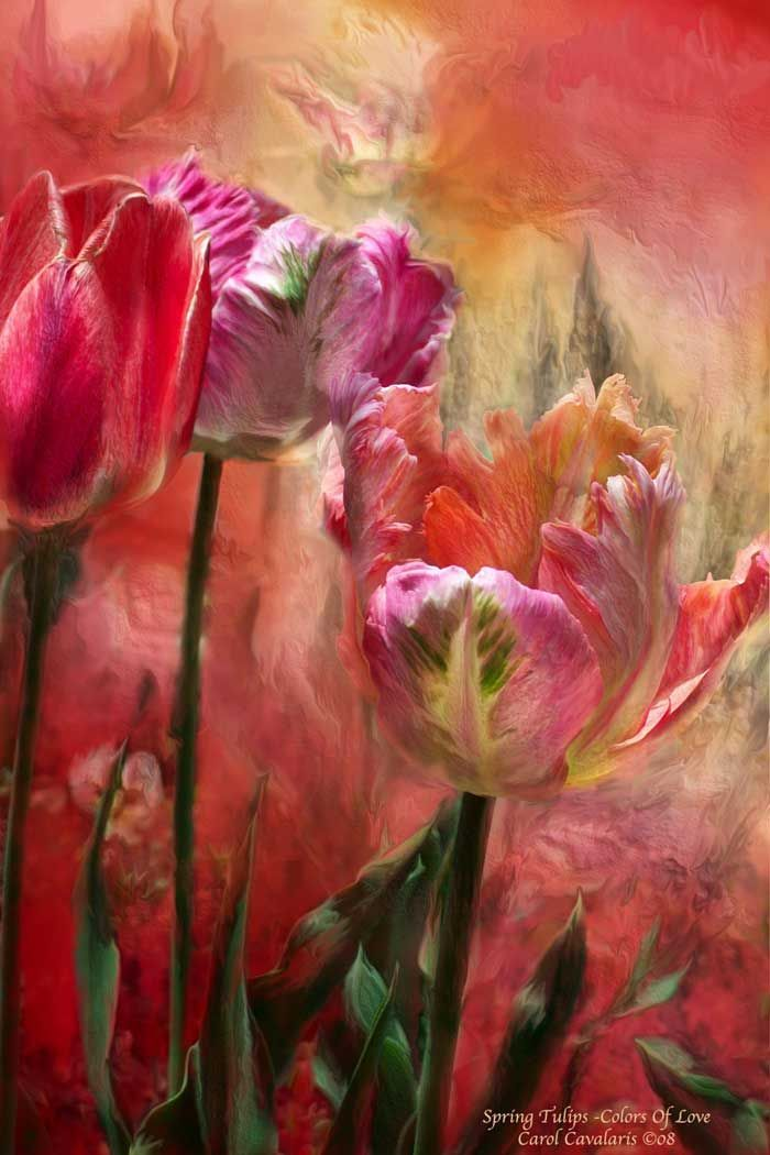 Spring Tulips ~ Color of Love  by Carol Cavalaris 2008