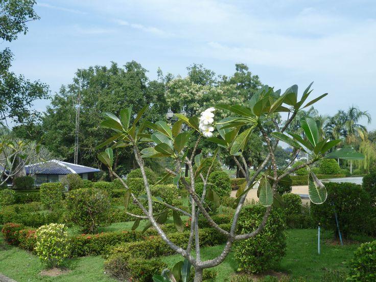 Сад на змеиной ферме