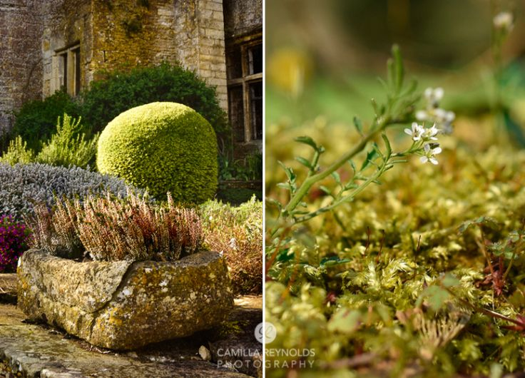 gerden textures stone planter topiary heather moss Cotswolds