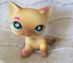 Resultado de imagen para lps shorthair cat