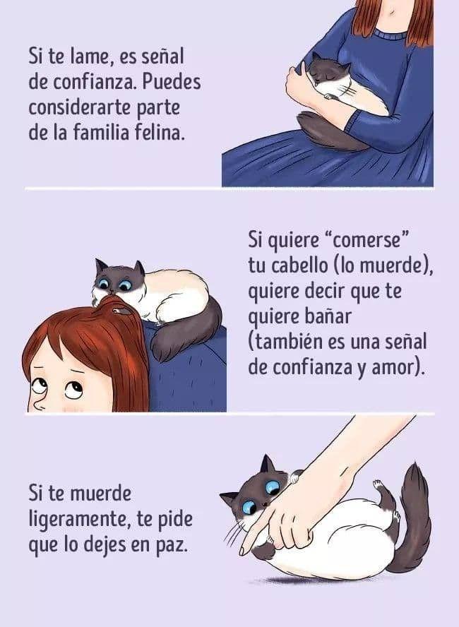 Pin De Nori En Educación Animal Lenguaje De Los Gatos Humor De Gatos Cuidar Animales