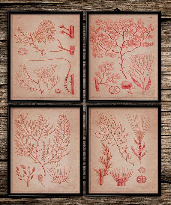 Vintage Sea Algae | Vintage Prints | Patent Prints | Home Office Decor | Printable Wall Art | Vintage Wall Art | 8x10 | Instant Download |