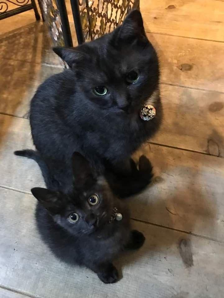 Pin By Joyce Clayborne On Gatinhos Cia Cute Cats Cats Kittens