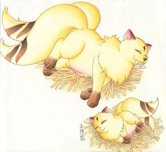 54 Best Images About Kirara On Pinterest