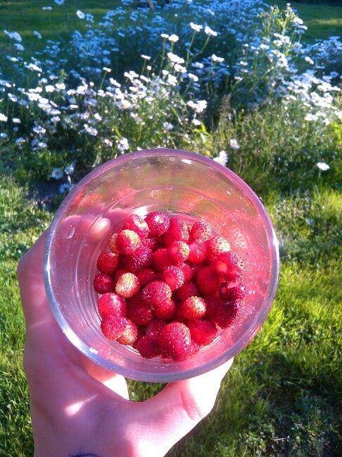 Wild strawberries from my garden <3