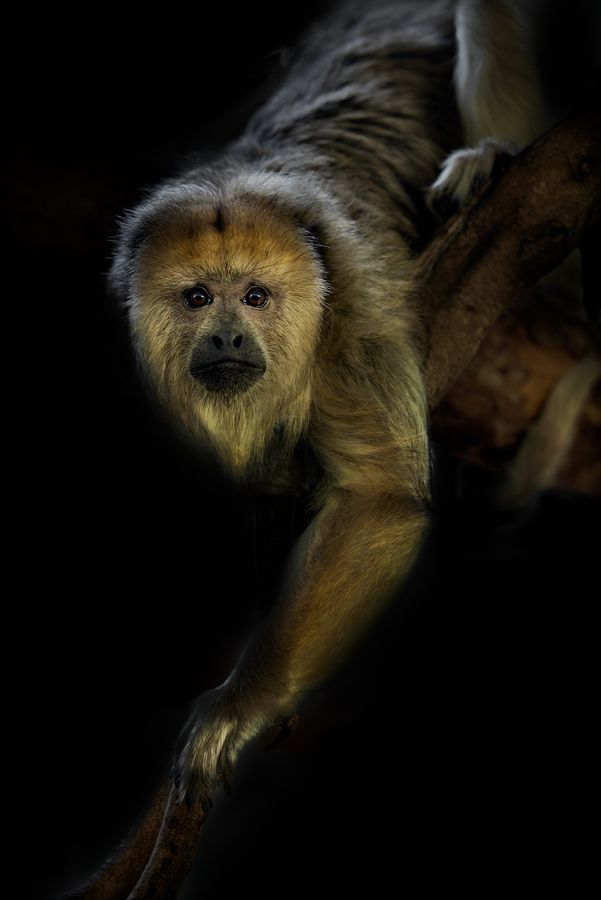 Howler by Sue Demetriou