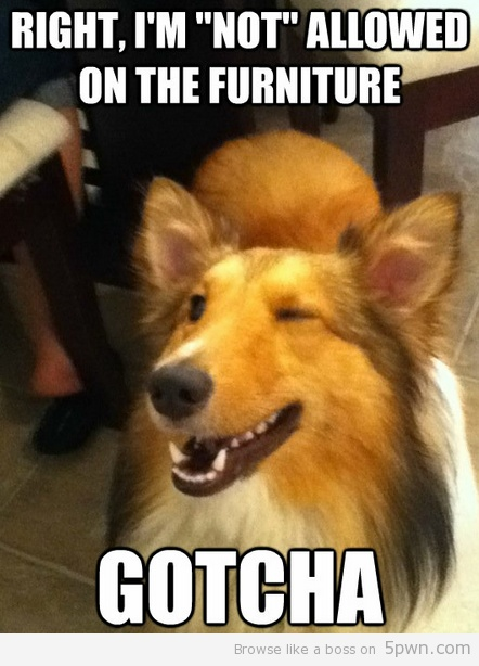 implying dog: Laughing, Funny Dogs, Dogs Meme, Funny Animal Pictures, Pet, Hilarious Animal, Puppys, Dogs Funny, Gotcha