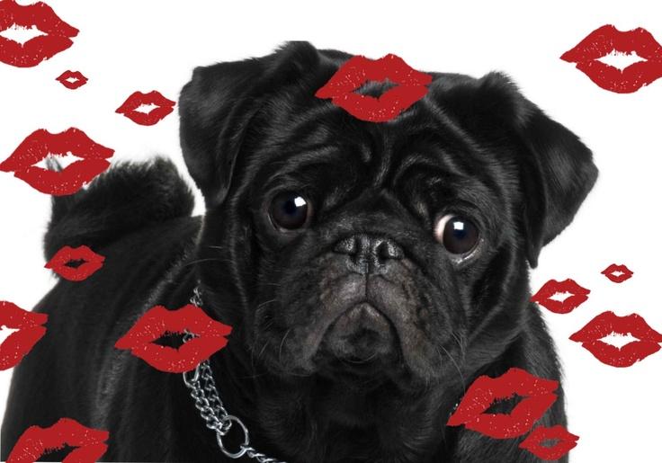 Pug Valentine | Cute pugs, Pugs, kisses, Baby pugs