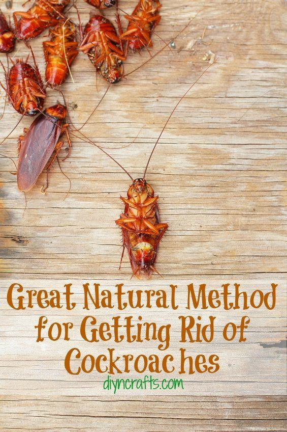 Great Natural Method for Getting Rid of Cockroaches – DIY & Crafts