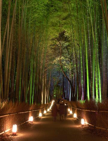 To wander through a bamboo forest at night~  Kyoto, Japan