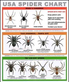 Study up on which spiders to be legit scared of and which are just creepy.