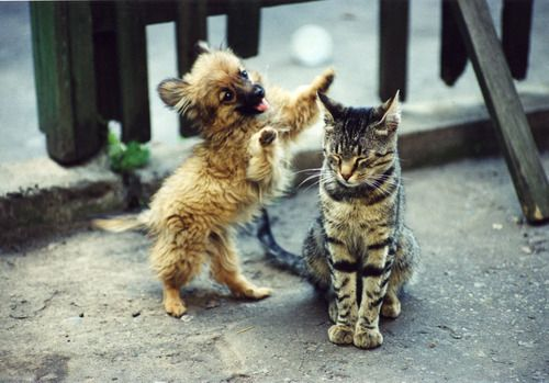 puppy attack: Cats, Funny Animals, Dogs, Adorable Animals, Pets, Funny Stuff, Funnies, Humor