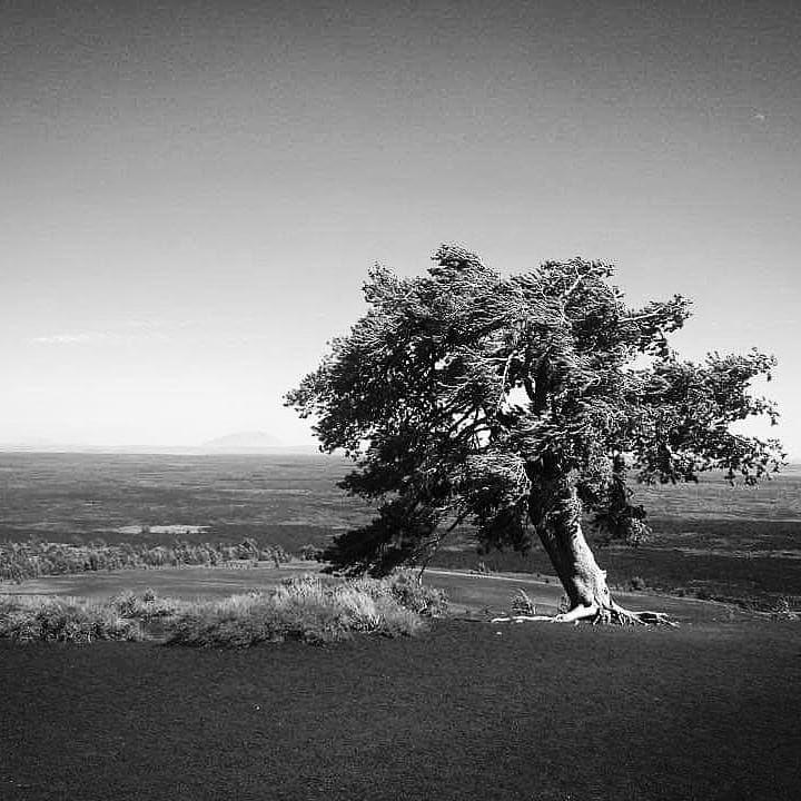 Lone Tree Ig Shotz Ig Myshots Ig Nature Interesting Igdaily