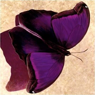 SPREAD YOUR WINGS AND PREPARE TO FLY BEAUTIFUL PURPLE BUTTERFLY