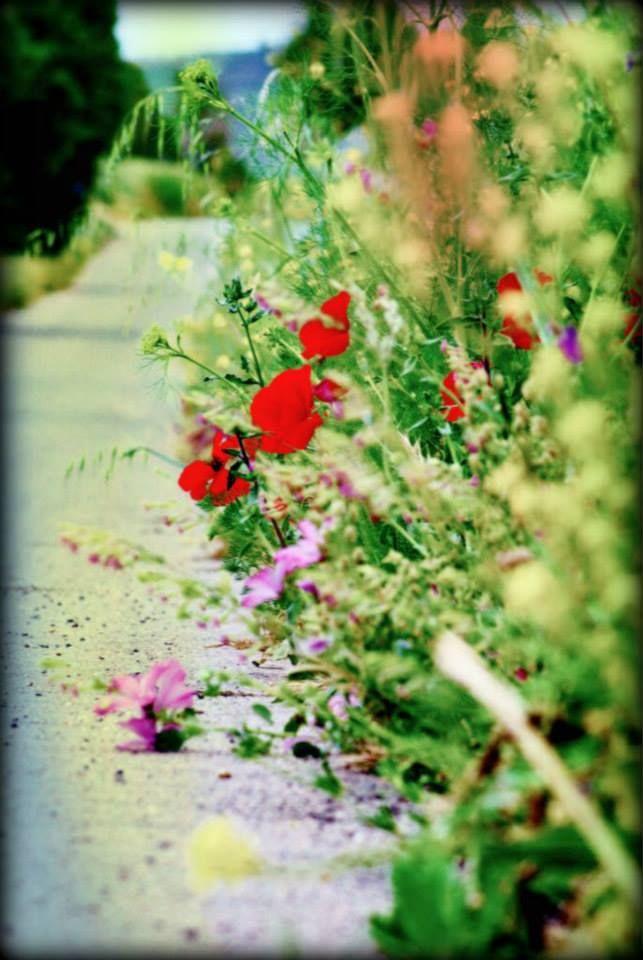 Corleone - Sicilia   Flower