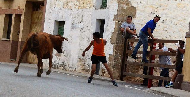 Santacara: Vacas Hermanos Ustarroz de Arguedas - (12)