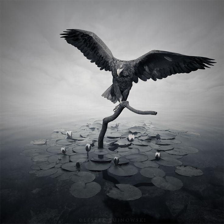 Photograph Alshain by Leszek Bujnowski on 500px
