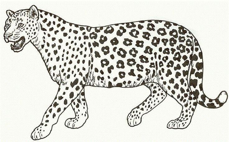Cheetah Coloring Pages Printable Animal Coloring Pages Lion Coloring Pages Super Coloring Pages