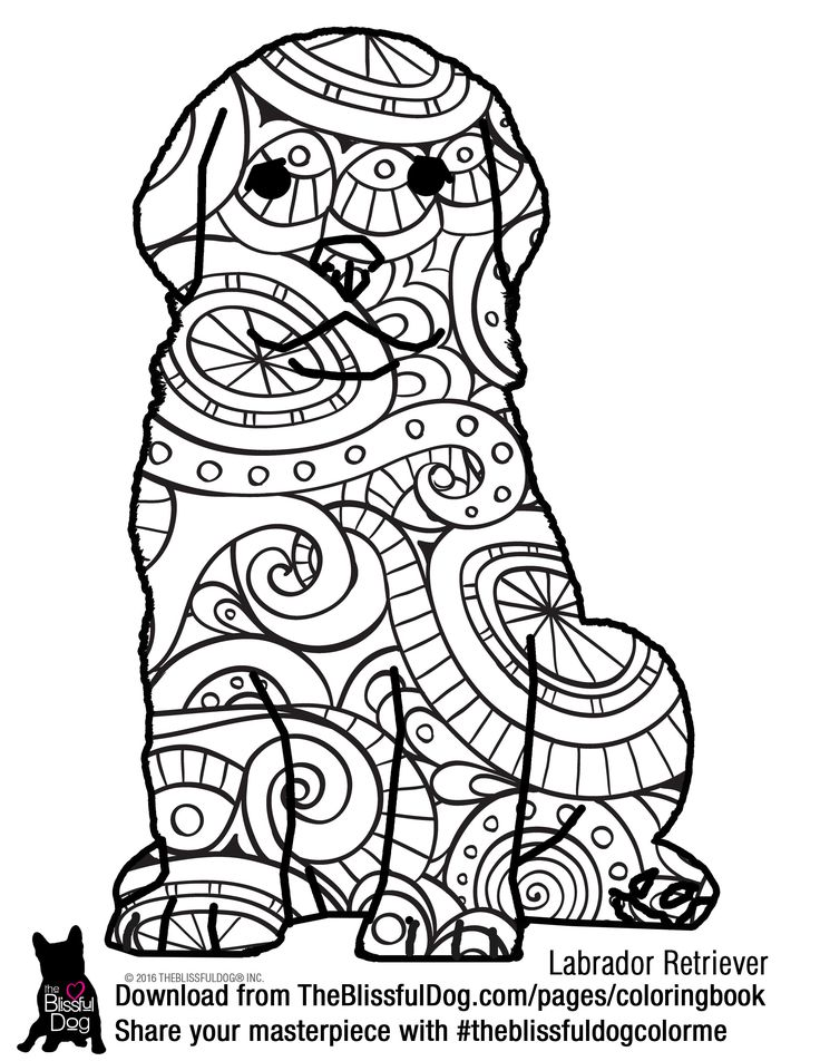 coloring book labrador retriever and labradors