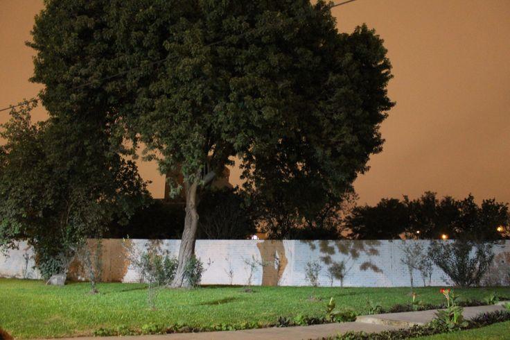 Caminando por las calles de Jesús Maria, me encontré con un árbol con una sombra muy peculiar. El árbol femenino lo llamé.