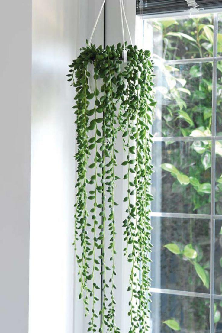 Indoor Trailing Plants For Hanging Baskets