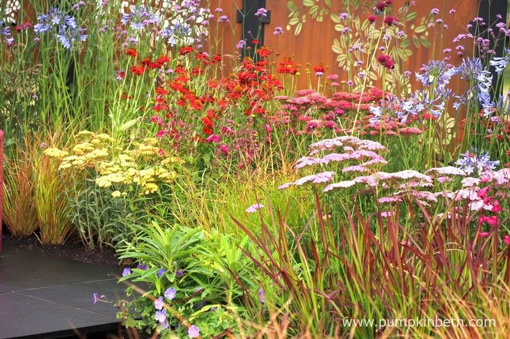 At the front: Imperata cylindrica 'Rubra', Achillea 'Pretty Belinda', Cirsium rivulare 'Atropurpureum', Achillea millefolium 'New Vintage Red', and Helenium 'Moerheim Beauty', pictured in the Colour Box Garden, at the RHS Hampton Court Palace Flower Show 2017.