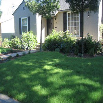 Buffalo Grass Seed.  Tough.  Drought resistant. Good in Texas.