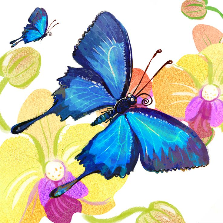 The beautiful Ulysses butterfly, our submission to animal alphbets on twitter.