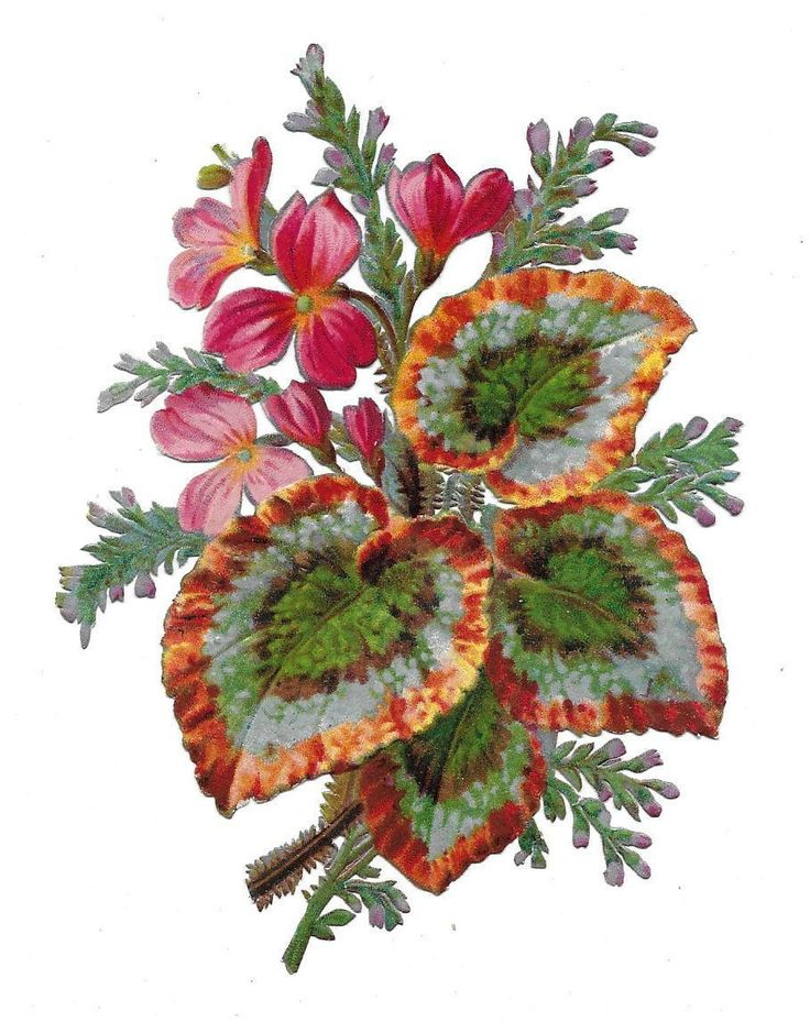 Victorian Die Cut Scrap 2 with Colourful Foliage ca. 1880s | eBay: