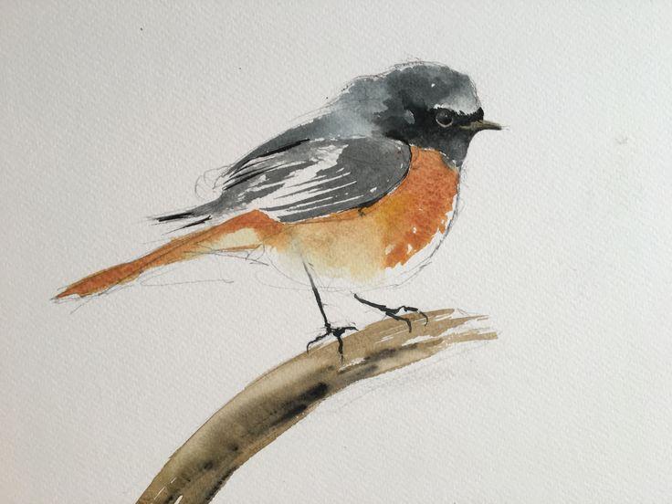 Redstart. Watercolor